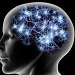 Tipi di personalita dipendono dalla forma del cervello e dalla corteccia cerebrale