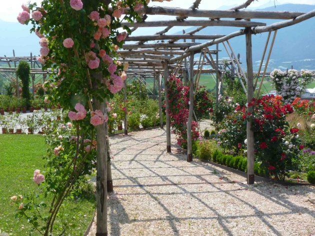 Grandi Giardini - Giardino della Rosa provincia Trento