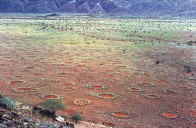 cerchi delle fate namibia
