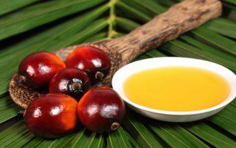 L'olio di palma non fa male alla salute: ad affermarlo, i relatori dell'Università Federico II