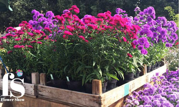 Perugia Flower Show Spring edition quando andare