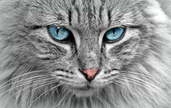 """Festa del gatto 2017: 5 curiosità sui """"campioni di fusa"""" e sulla giornata a loro dedicata"""
