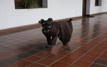 Il monastero ha adottato un cane e lui si è fatto frate: ecco la storia di Fra Bigotón