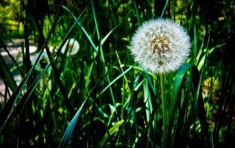 Allergie primaverili, da cosa dipendono e come contrastarle
