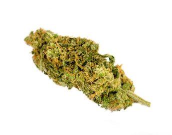 Marijuana cura per ansia e dipendenza, dice uno studio