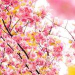 equinozio di primavera 2017