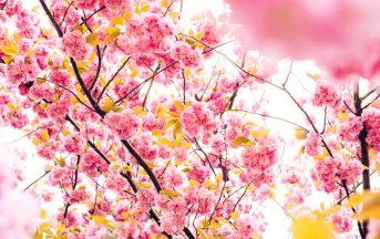 Equinozio di primavera 2017, 20 o 21 marzo? Significato e tradizioni legate alla fine del periodo invernale
