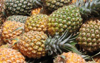 Tisana all'ananas, ottima per diuresi e cellulite