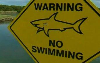 Ragazza uccisa da squalo in Australia: è vero ma i numeri dicono altro e i media la raccontano a metà