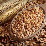 Farro, proprieta, benefici, valori nutrizionali, ricette e calorie