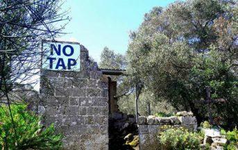 Gasdotto in Puglia, Tar respinge ricorso Regione: gli ulivi saranno espiantati