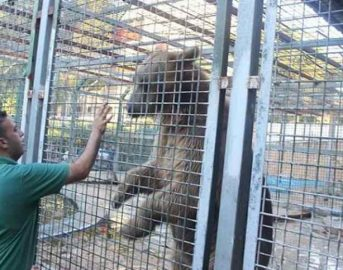 Cisgiordania, orrore allo zoo: orso sbrana braccio di un bambino