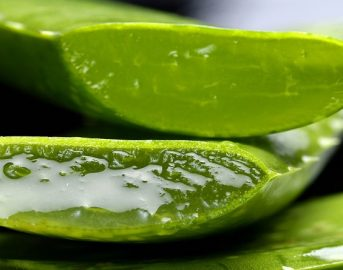 Aloe vera: cos'è, a cosa serve e come utilizzarla