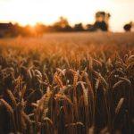 offerte di lavoro agroalimentare