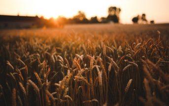 500 offerte di lavoro nell'agroalimentare: dal Veneto alla Puglia, Openjobmetis cerca personale anche senza esperienza