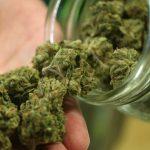 Marijuana legale, ora in commercio ma ha effetti psicotropi