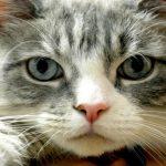 Tumore alla prostata, a causarlo potrebbe essere un parassita del gatto