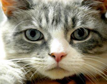 Tumore alla prostata: parassita dei gatti potrebbe causarlo? Ecco la verità