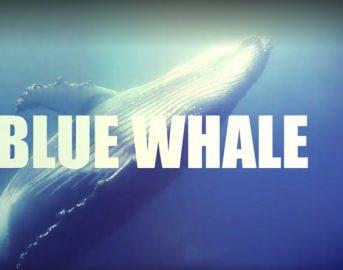Blue Whale analizzato dalla psichiatra Gloria Faraci: fra eroismi distorti, fenomeni analoghi già visti e approssimazioni