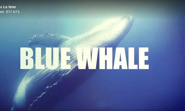 blue whale, blue whale le iene, blue whale gioco, blue whale regole, blue whale cos'è, blue whale chi l'ha inventato