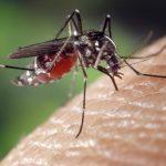 punture di zanzara, zanzara, punture di zanzara prurito, punture di zanzara rimedi naturali,