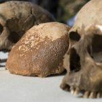 Homo Sapiens potrebbe essere piu antico di quanto pensiamo, lo svela una ricerca