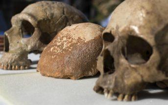 L'origine dell'Homo Sapiens potrebbe essere più antica, lo svela una ricerca scientifica