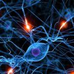 Sclerosi multipla, CCSVI potrebbe essere causata da Clamidia, lo studio scientifico