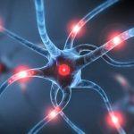 Dopamina, gioca un ruoo chiave nelle difese immunitarie, scoperta di un team australiano
