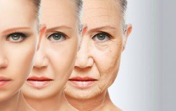 Invecchiamento: scoperta centralina che regola l'allungamento della vita