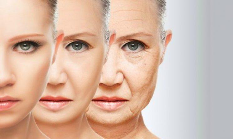 Invecchiamento, scoperta centralina che regola allungamento della vita