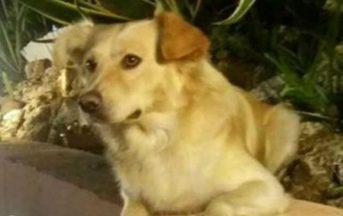 Calabria, cane seviziato e impiccato: insorgono gli animalisti, ma nessuna traccia dei colpevoli