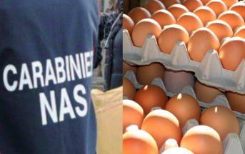 Uova contaminate al Fipronil in Italia: 90mila sequestri a Viterbo e Ancona