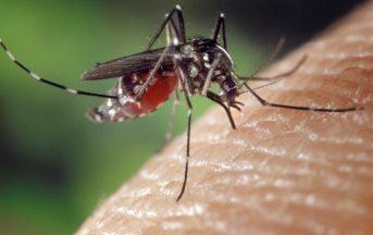Chikungunya ultime news: un caso nelle Marche, in provincia di Ancona