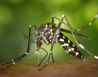 Chikungunya ultime news: 11 nuovi casi accertati nel Lazio, 4 a Roma