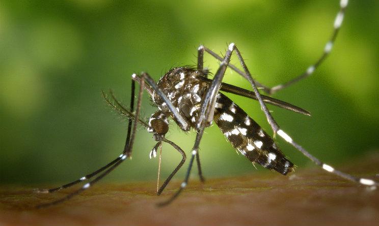 Chikungunya, è emergenza scorte sangue