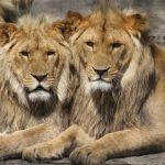 argentina zoo animali drogati
