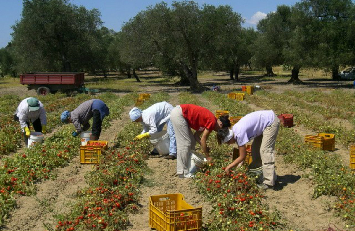 """Braccianti agricoli sfruttati, 20 euro per 12 ore di lavoro al giorno: la testimonianza di un ex """"schiavo"""""""