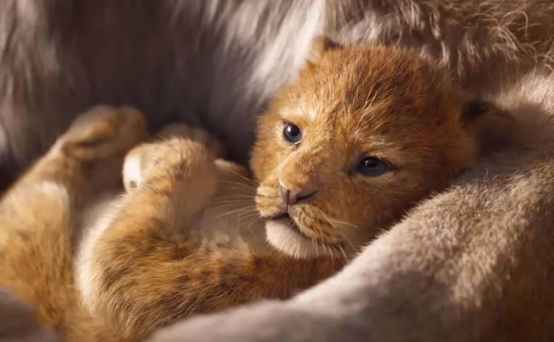 il re leone timon e pumbaa