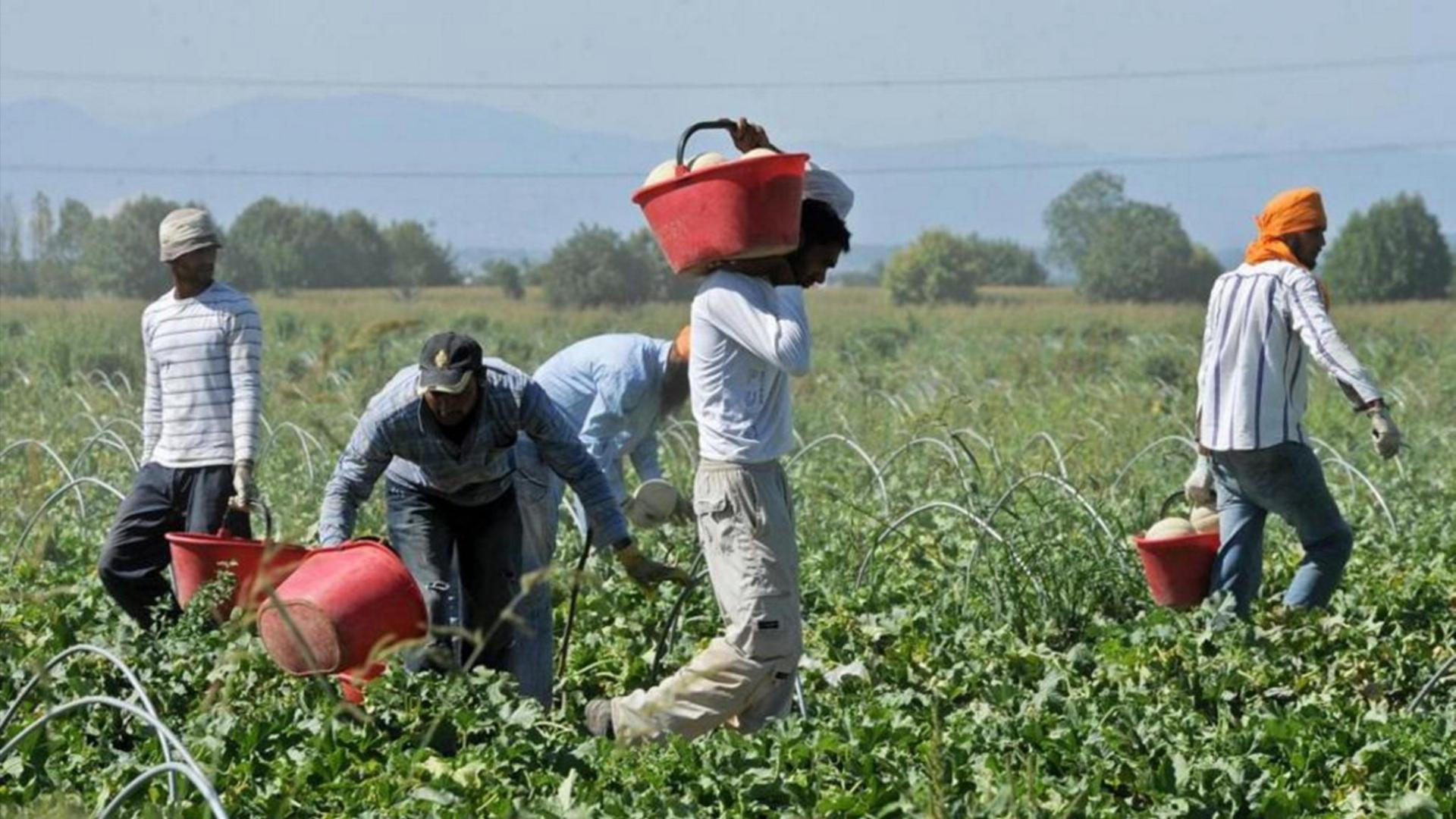 regolarizzazione immigrati braccianti agricoli