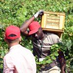 regolarizzazione lavoro nero