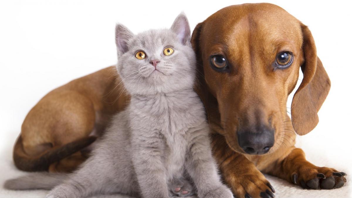 Bonus animali domestici: un assegno una tantum per gli amici