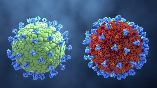 coronavirus car