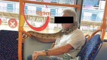 serpente autobus