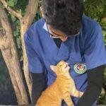 coronavirus gatto infermiere
