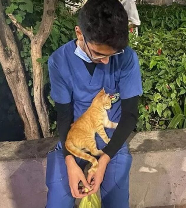gatto infermiere
