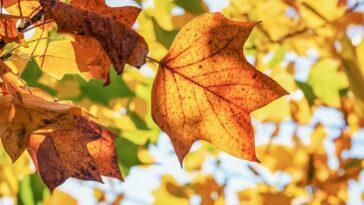 equinozio autunno