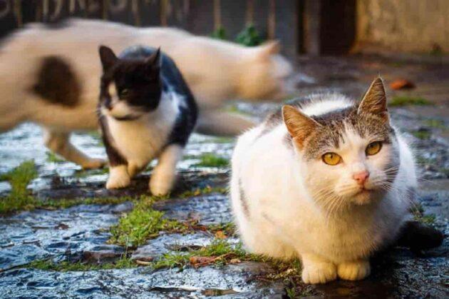 designano bagni gatti