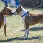 sbranata due cani