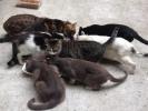 Colonia di Laura: per un mese su facebook il diario di una gattara
